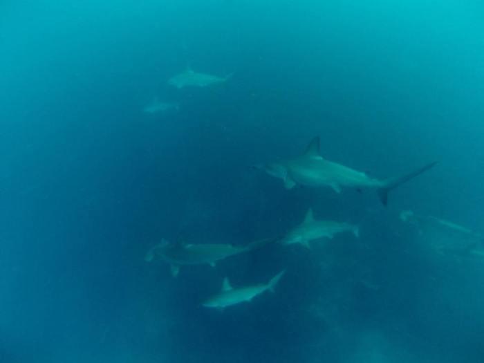 cápák