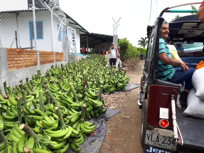 banán kicsi